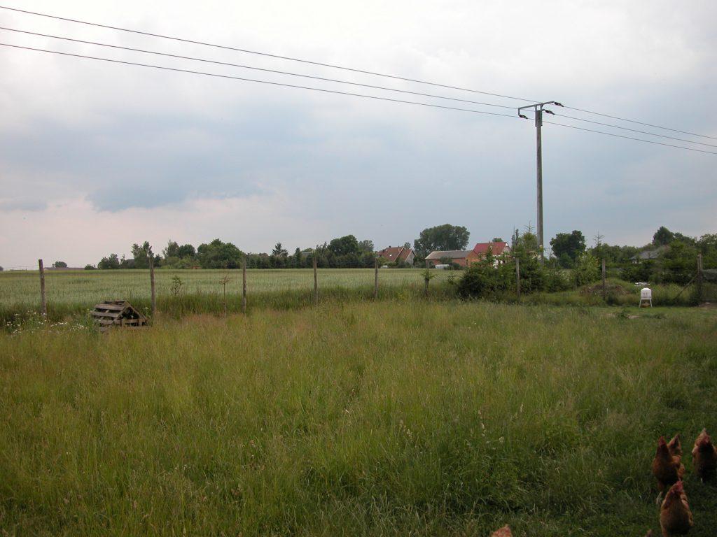 Backyard chicken farm