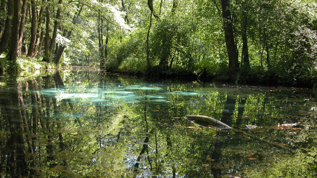 You can find bubbling springs throughout the area