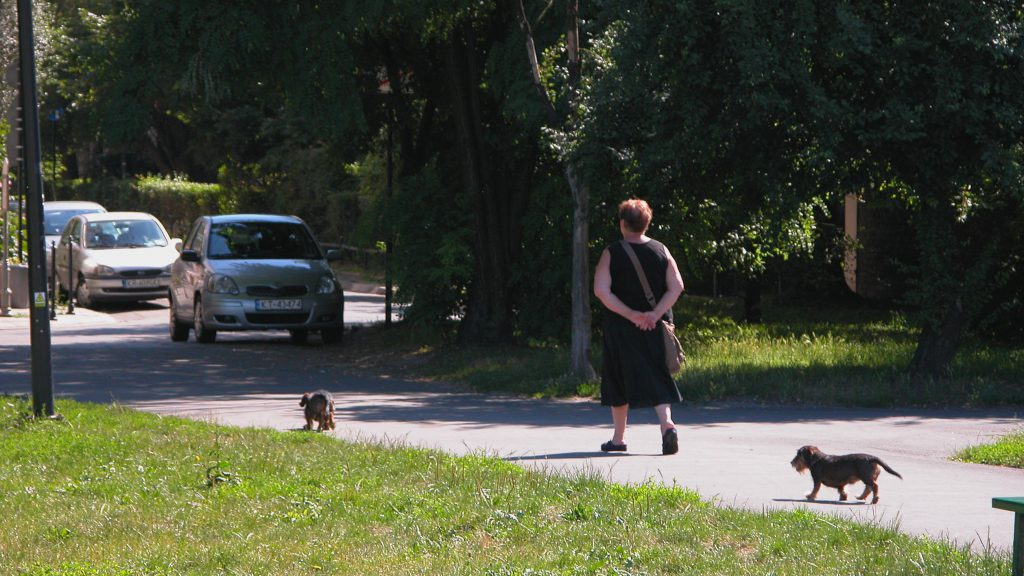 Dog walking in Poland