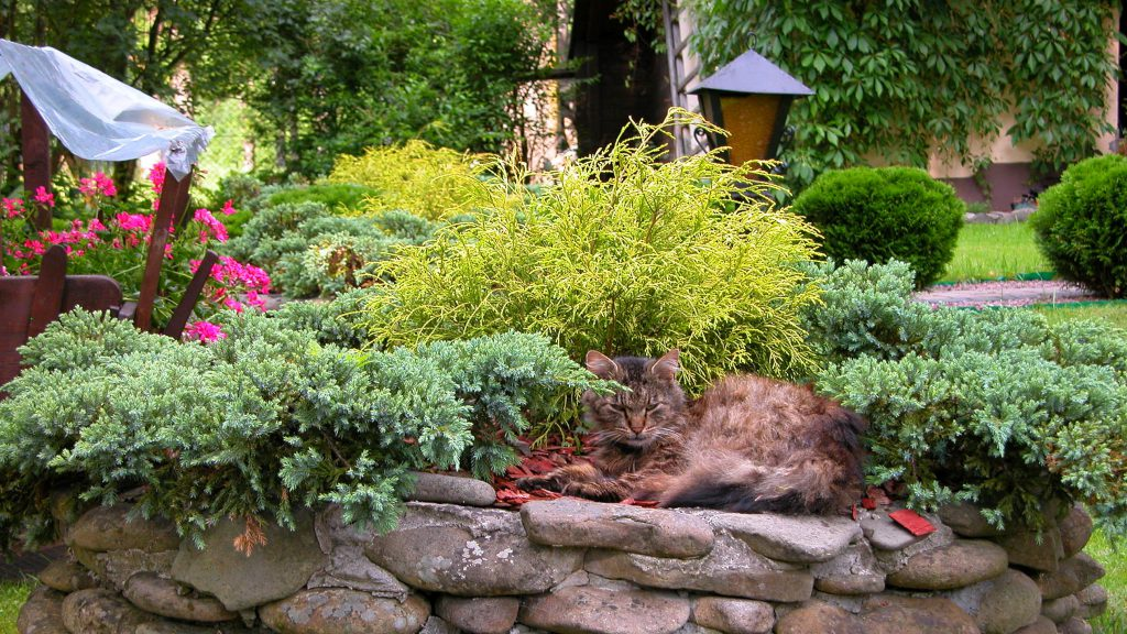 Cat laying in the garden