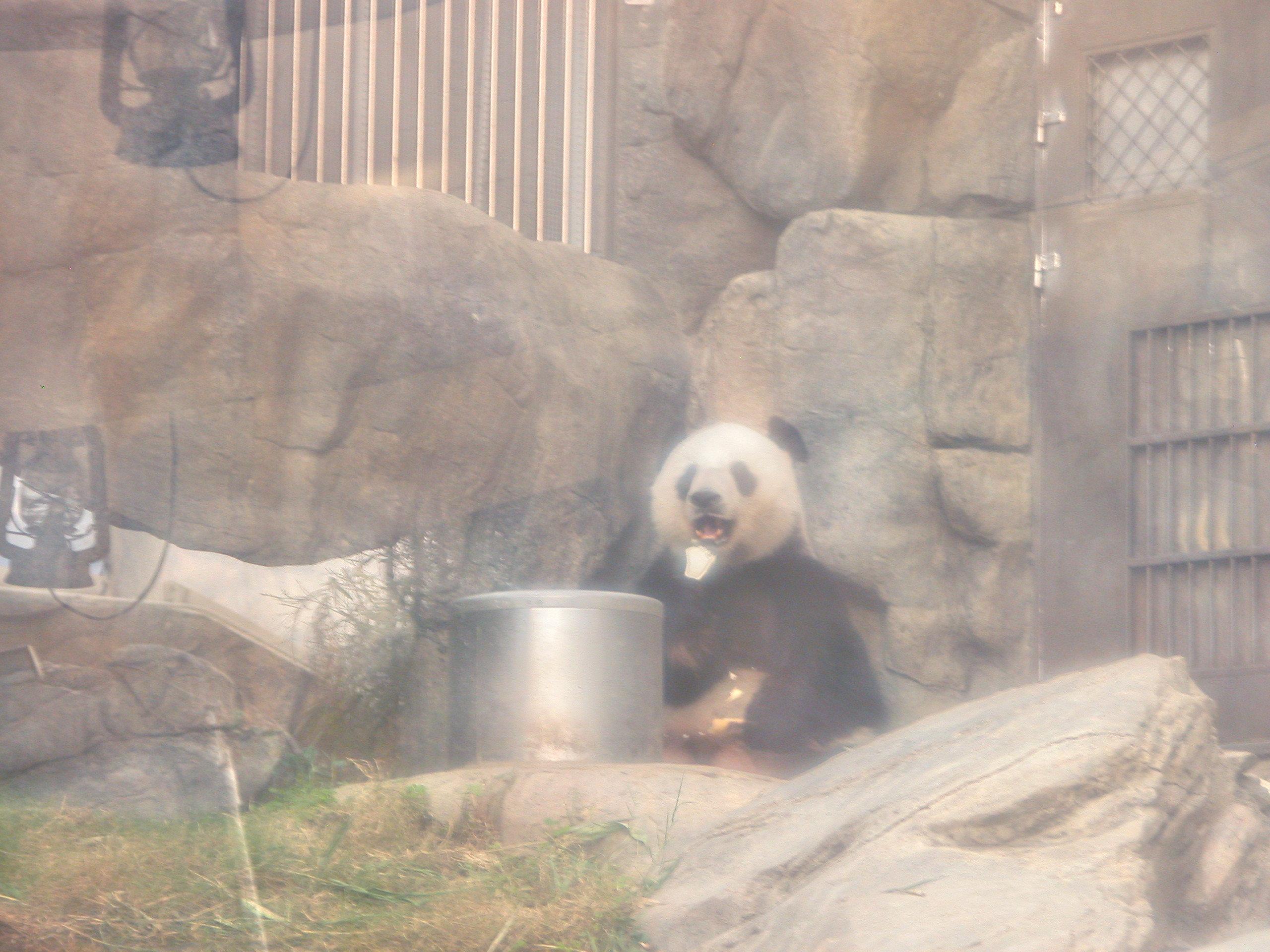 Ocean Park Panda Exhibit