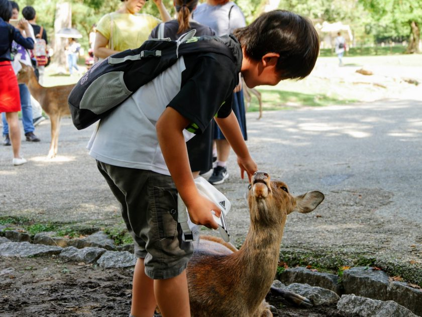 Child petting deer