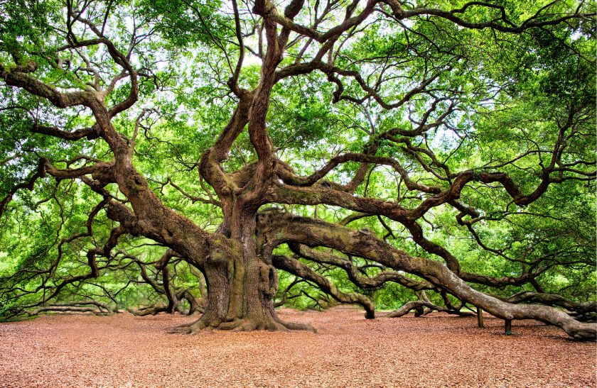 Angel Oak, South Carolina